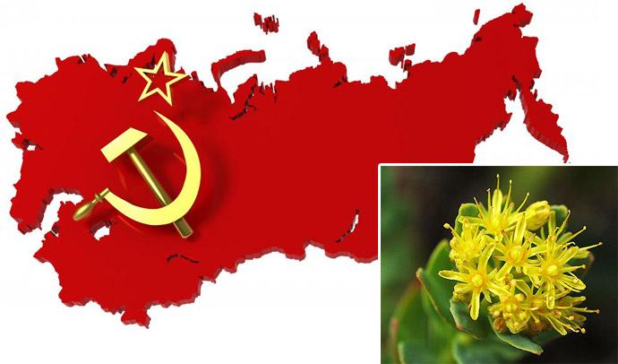 Rosenrot-stress-soviet